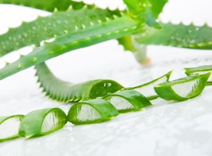 Aloe Vera ist ein echter Alles-Könner! Doch woher bekommt man das beste Gel, wie benutzt man die Pflanze und worauf muss man achten?